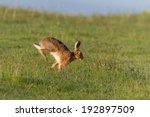 Stock photo hare running 192897509