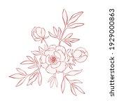 hand drawn line art peony... | Shutterstock .eps vector #1929000863