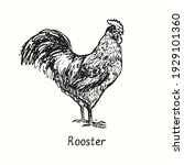Rooster Side View. Ink Black...