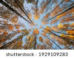 autumn scenery. bottom view of... | Shutterstock . vector #1929109283