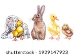 duckling  goat  cute chick and... | Shutterstock . vector #1929147923