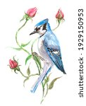 Blue Jay Bird With Rose Flowers ...