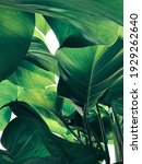 Abstract tropical green leaves...