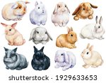 Set Of Bunnies On An Isolated...