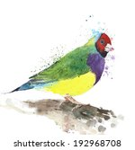 bird gouldian finch watercolor... | Shutterstock . vector #192968708