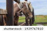 A Closeup Shot Of A Brown Horse ...