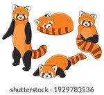 red panda set  cute fluffy wild ... | Shutterstock .eps vector #1929783536