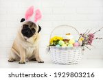 Happy  Easter  Pog  Dog With...