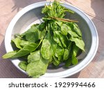 Fresh Long Spinach Leaves In...