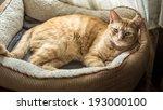 Stock photo cat in his cat bed 193000100
