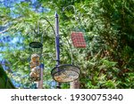 Bird Feeders Hanging Up In A...