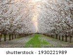 Fresno county blossom trail 2021 spring