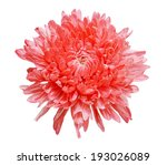 chrysanthemum isolated on a... | Shutterstock . vector #193026089