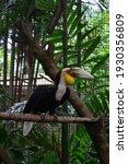 Small photo of dodo bird in bird park bogor indonesia
