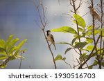sparrow sitting on the branch  | Shutterstock . vector #1930516703