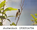 sparrow sitting on the branch  | Shutterstock . vector #1930516706