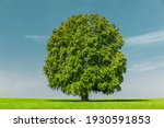 Green Tree On On A Green Meadow