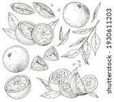 vector collection of hand drawn ... | Shutterstock .eps vector #1930611203