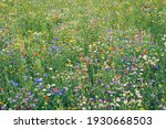 Natural Flower Meadow  Colorful ...