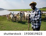 Africa American Man Feed And...