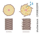 normal and damaged hair.... | Shutterstock .eps vector #1930832099