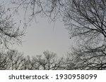 Beautiful Trees In Winter. Tree ...
