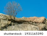 Tree Growth On A Sandy Hill In...