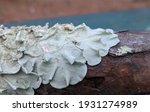 Pine Tree Bark Covered With A...