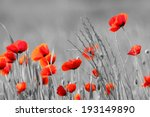 Red Poppy Flowers With Black...