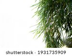 green bamboo leaves with... | Shutterstock . vector #1931735909