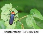 soldier beetle | Shutterstock . vector #193209128