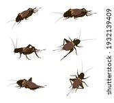 food insects  crickets insect... | Shutterstock .eps vector #1932139409