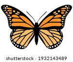 Monarch Butterfly. Hand Drawn...