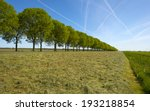 Row Of Trees Along A Field In...