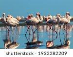 Wild African Birds. Group Birds ...