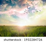Flying Birds Over A Green Field ...