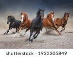 Horses Free Run On Desert Storm ...