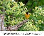 The Village Weaver Bird Also...