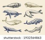 fur seal  steller sea lion and...   Shutterstock .eps vector #1932564863