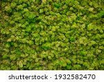 Natural Moss In Nature. Green...