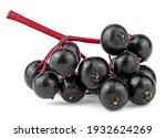 European Black Elderberry Fruit ...