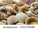 Seashells In Soft Blurred Focus....