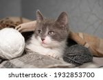 A Small Playful Cute Gray And...