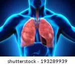 human respiratory system   Shutterstock . vector #193289939