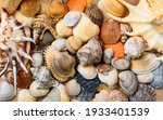 Many Multi Colored Shells Of...