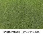 Artificial green grass ...