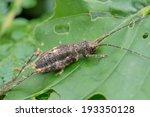 macro shot of a brown cricket...   Shutterstock . vector #193350128