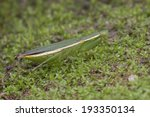 Macro shot of a green mantis on mossy surface