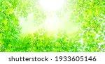 fresh green leaves spring... | Shutterstock . vector #1933605146