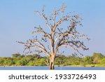 A Dead Tree In The Water Is...